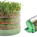 vertus des graines à germées - synergie alimentaire