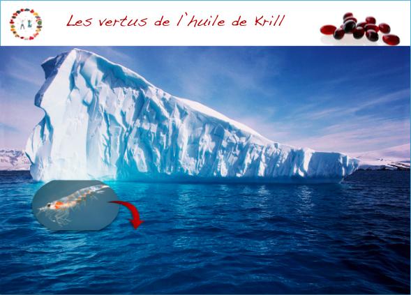vertus de l'huile de krill - synergie alimentaire