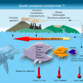 quels poissons consommer - synergie alimentaire