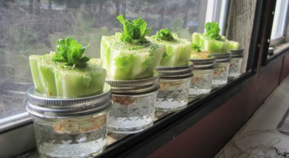 légumes à faire repousser soi-même - synergie alimentaire
