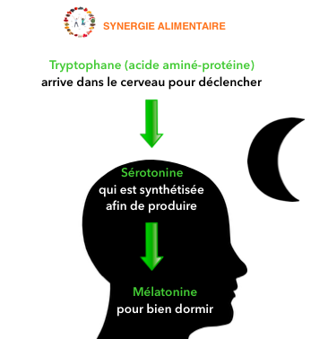 tryptophane-sérotonine-mélatonine